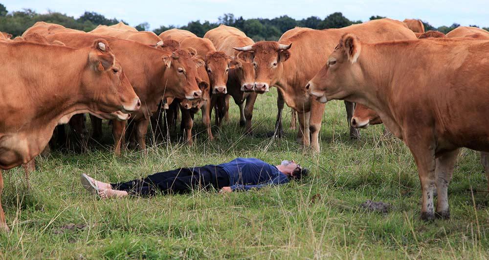Davide Napoli Performance chantons aux vaches